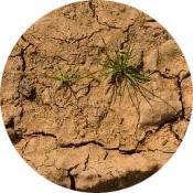 soil_wins